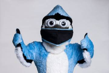 Blue Jay mascot in mask